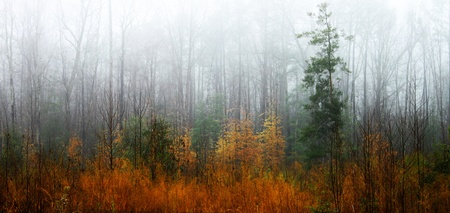 A low laying fog coming in and setting down through the woods after a freshly fallen rain