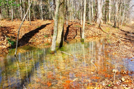 the draining: Early spring rainfall Swampwater running through the woods and draining into the local water-table Stock Photo