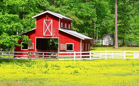 An unusual two story old red horse barn outside among the woods in a buttercup field