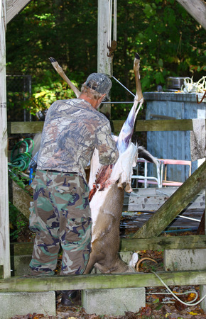 GLOUCESTER, VA - OCTOBER 18, 2014: An unknown man in hunting camoflage in the process of cleaning and skining his fresh killed field stripped four point Buck/Deer on the first weekend of Bow season using his Deer cleaning setup he built himself. Stock Photo - 33361225