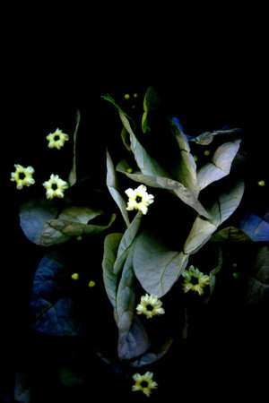 Abstract forms of flowers in the darkness. photo