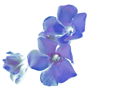 Blue flowers abstract as a fantastic background.