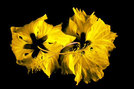 Fantastic flowers abstract as a nice background. Stock Photo