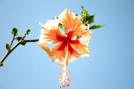 Alone big flowergoes to the sky. Stock Photo - 1638852