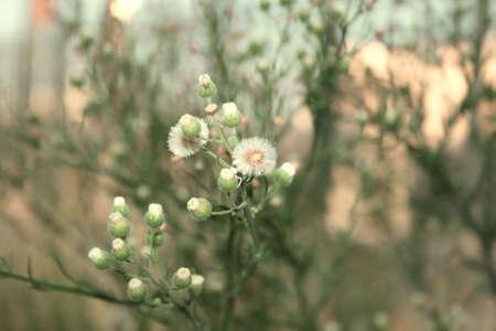 fluff: White pelusa de oto�o de plantas.