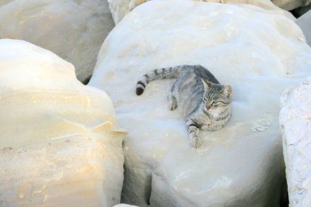 The cat on the big stone. photo