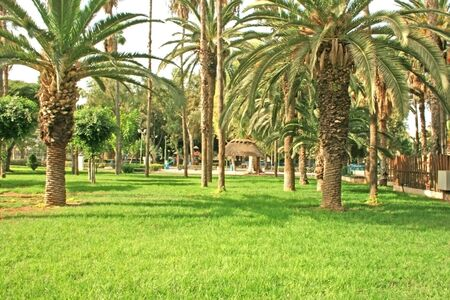 limassol: Palms in the municipality park in Limassol in Cyprus.