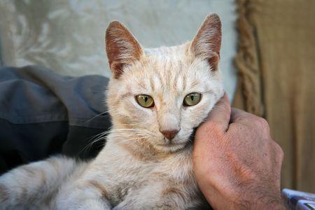 tawny: Tawny cat in the man hand.