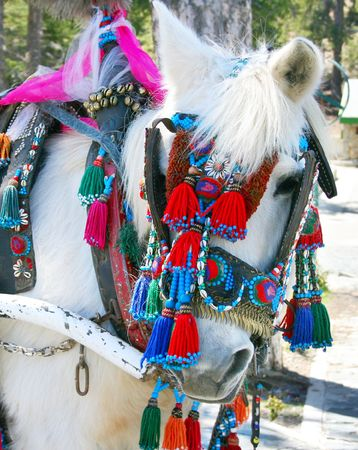accessories horse: White horse with colorful accessories.