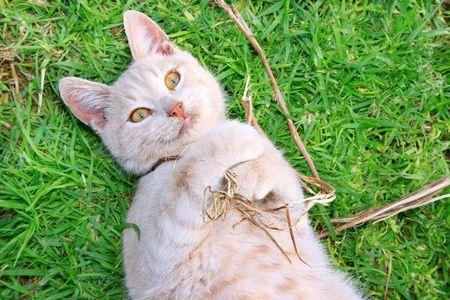 tawny: Tawny cat on green grass. Stock Photo