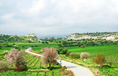 Cyprus landscape with hills,meadows,trees and orchards. photo