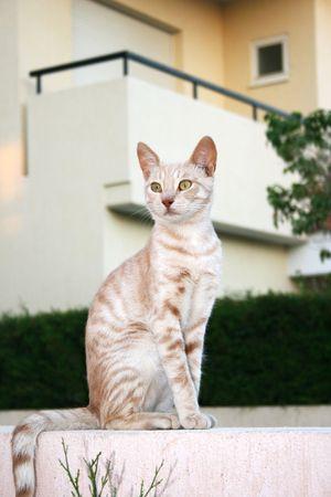 tawny: Tawny cat sitting on wall.