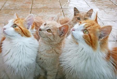 Cats behind window in rain. photo