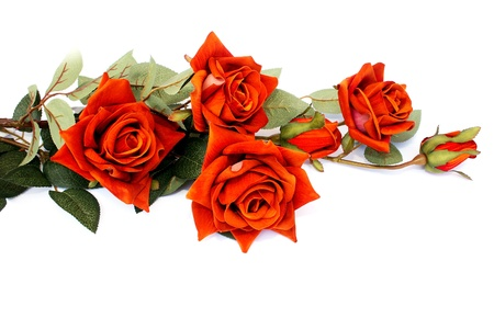 Red roses isolated on white background. Stock Photo - 8539505