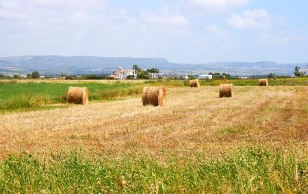 Hale bales in Cyprus village field. photo