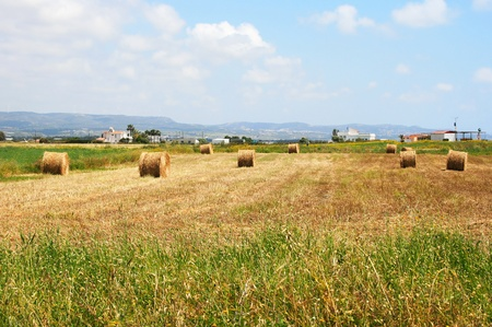 Hale bales in Cyprus village field. photo
