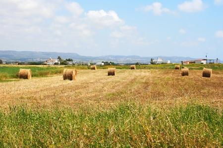 Hale bales in Cyprus village field. Stock Photo - 12862188
