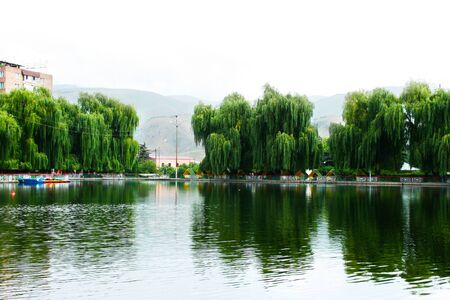 Willow trees at the lake in Vanadzor city, Armenia. Stock Photo - 13506701