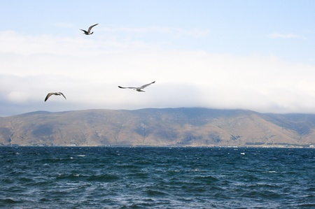 Sevan lake and flying seagulls in foggy day, Armenia. photo