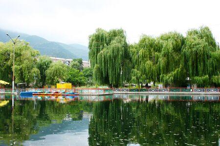 Willow trees at the lake in Vanadzor city, Armenia. photo