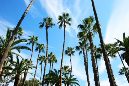 Palm trees in Cyprus. photo