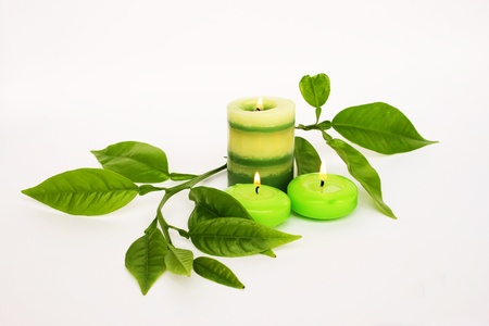 Green candles,  leaves isolated on gray background. photo