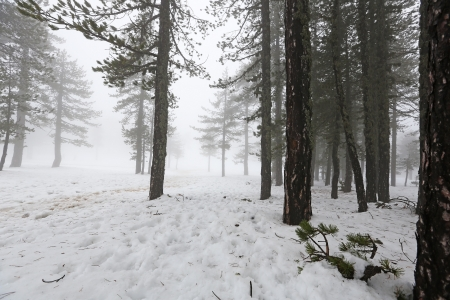 Winter foggy day in mountain Troodos in Cyprus. photo