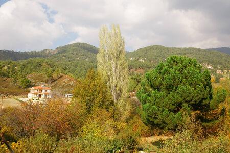 garden settlement: Cyprus village in mountains forest.
