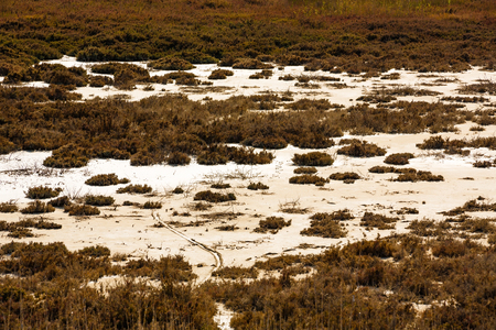 Dramatic picture of the swamp in Cyprus. Stock Photo