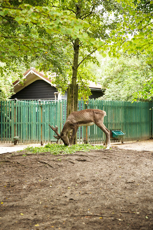 The red deer in the zoo. Imagens