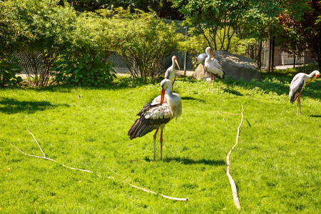 Group of the storks in the zoo.