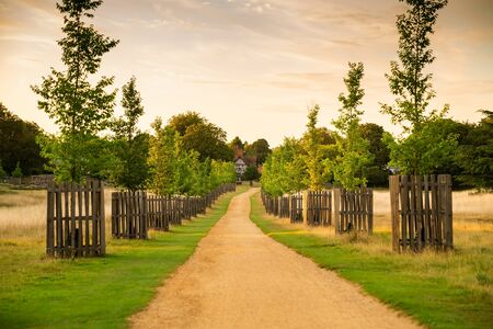 Landscape with trees, field, path and house in sunny summer day in Richmond Park, London, UK.