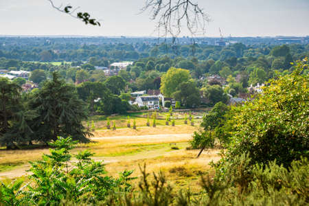 Landscape with trees and field in sunny summer day in Richmond Park, London, UK.