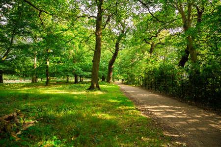 The path in Richmond park, London, UK. Imagens