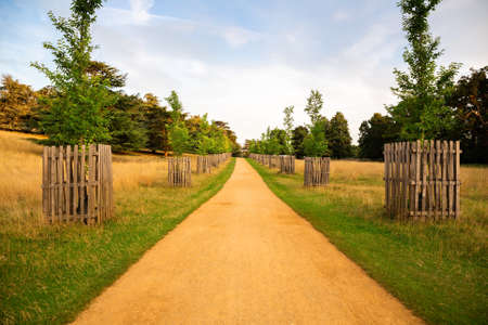 Landscape with trees, path and field in sunny summer day in Richmond Park, London, UK. Imagens