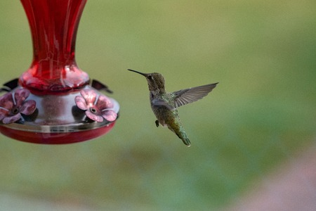Hummingbird hovering near a feeder