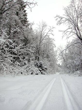 Ski track in winter forest                                Stock Photo