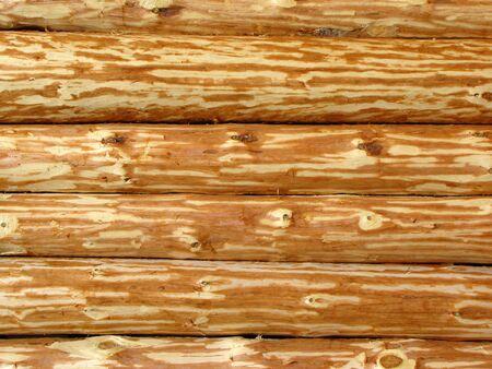 Wooden log wall                                 photo