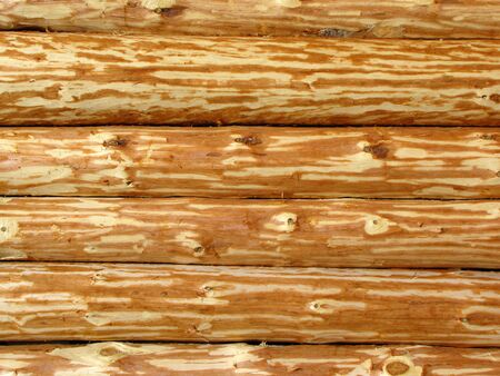 Wooden log wall Stock Photo - 6667228