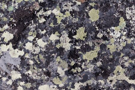 black granite: Lichen on granite stone background Stock Photo
