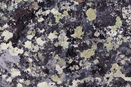 damp: Lichene su sfondo pietra di granito