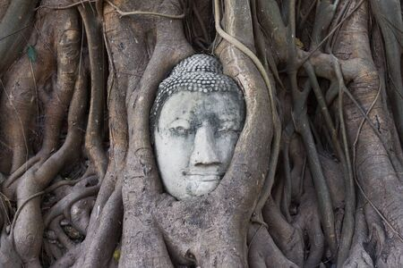 Buddhas head in banyan tree roots, Ayutthaya, Thailand  photo