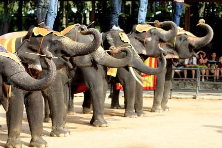 pattaya thailand: Elephant show, Thailand
