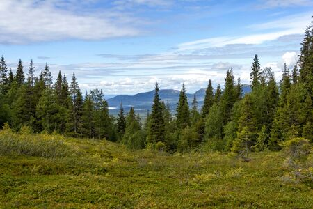 Beautiful forest landscape in the Kola Peninsula, Russia photo