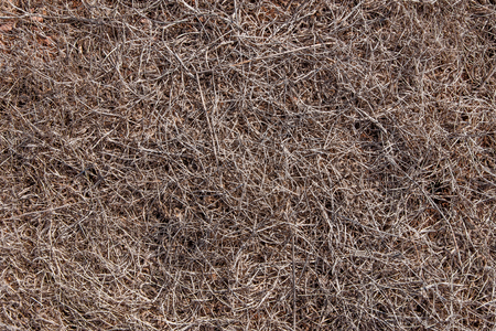 Completely dried out soil of Ponta do Rosto Madeira. photo