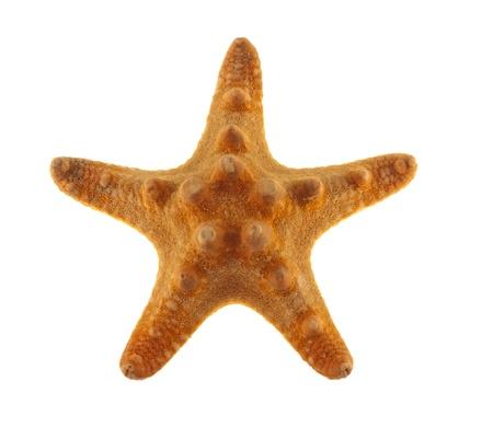 Starfish on a white hum