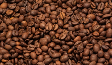 Coffee in grains photo