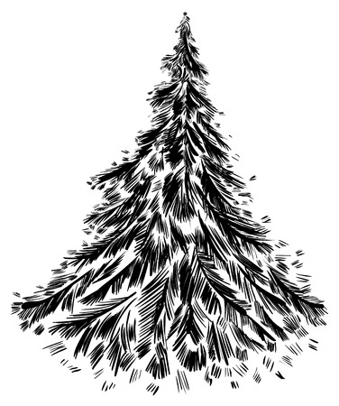 black pine: Handdrawing of tree.