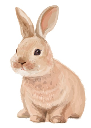 rabbit ears: Vector of cute rabbit isolated on white background