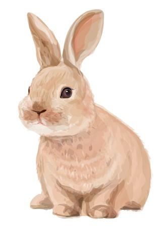 wit konijn: Vector van schattig konijn geïsoleerd op witte achtergrond